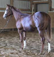 Mane-janes-yearling-standing